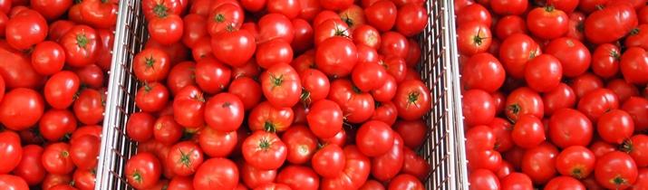 http://wanowa-hidaka.com/wp/wp-content/uploads/tomato_t2.jpg